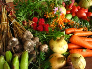 Ecologically_grown_vegetables - bhagchandra.com
